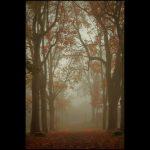 Neblige November Stimmung - DH Fotoart.ch für Spezielles